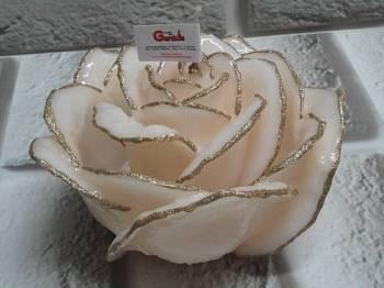 Τριαντάφυλλο διπλό εκρού