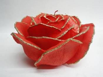 Τριαντάφυλλο διπλό κοραλί - χρυσό