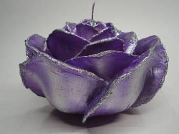 Τριαντάφυλλο διπλό σκούρο μώβ